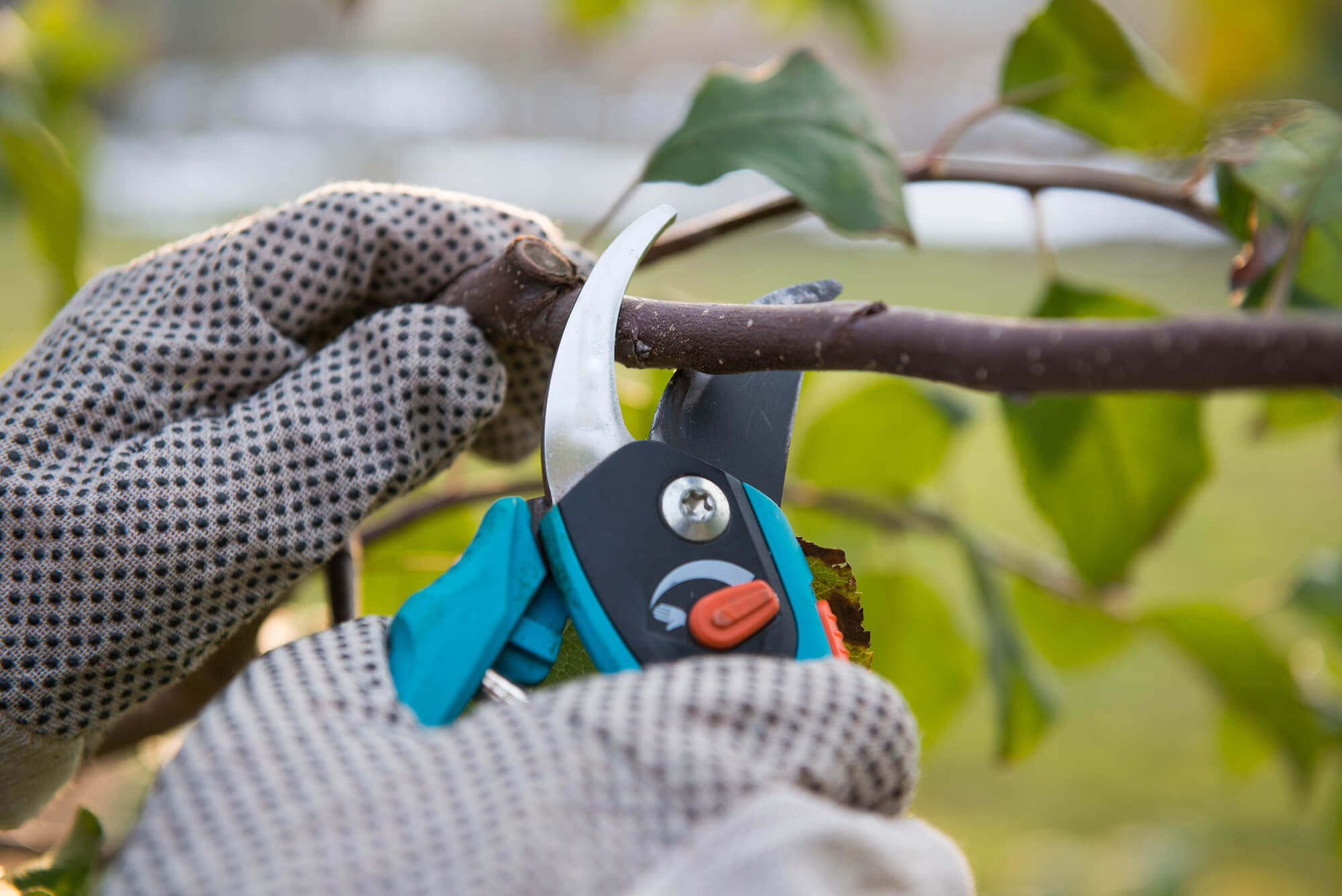 pruning tree branch